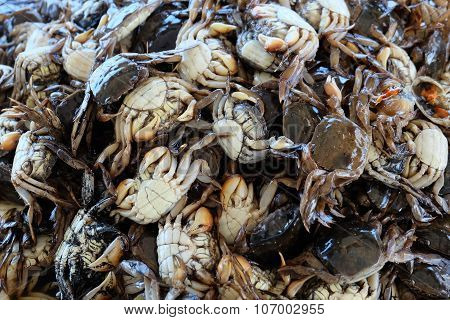 salted crab