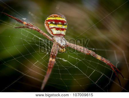 St Andrews Spider