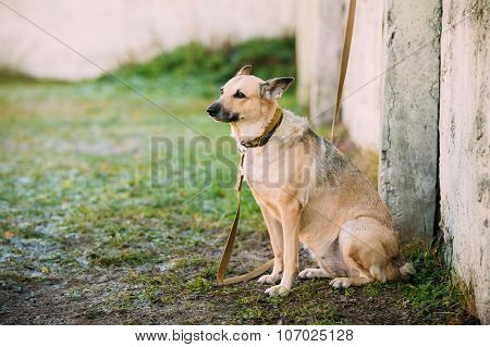 Mixed Breed Medium Size Brown Dog Outdoor