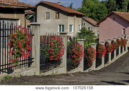 Beauty fence decoration with flowering red geranium cascade flowers in the pot
