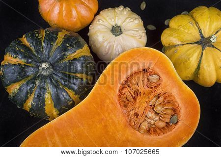 Colorful pumpkins and squash - Fall season colors concept background