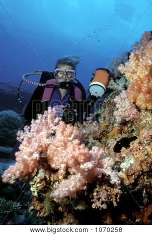Diver And Soft Corals