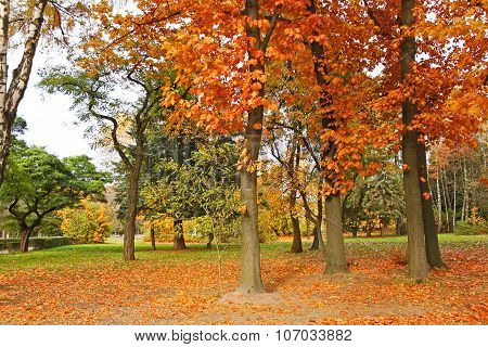 Beautiful Park Trees In Calm Autumn Weather