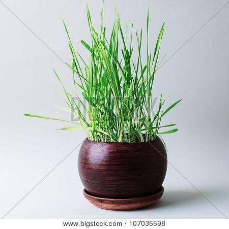 Home Green Flowerpot