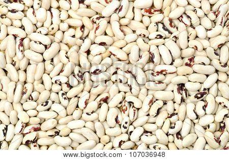 White Beans Background