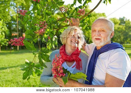 Senior couple in spring under a blooming chestnut tree (Aesculus x carnea)