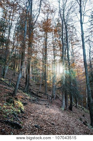 Autumn Deciduous Forest And Shining Sun, Natural Seasonal Scenery