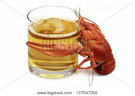 Boiled Red Lobster Is Hugging A Glass Of Beer