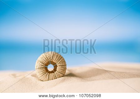 sea urchin - nice and colorful  on white sand beach, ocean,  sky and seascape