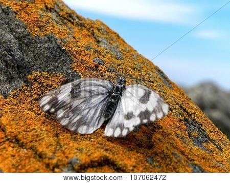 Butterfly resting on rock 1