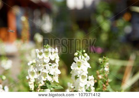 Crepe Myrtle Bloom Under Sunlight