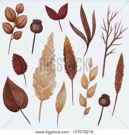 Watercolor golden brown autumn leaves illustration set. Plant elements collection.