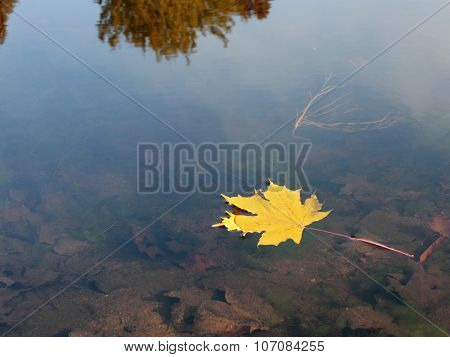 Yellow Leaf In  Lake Water