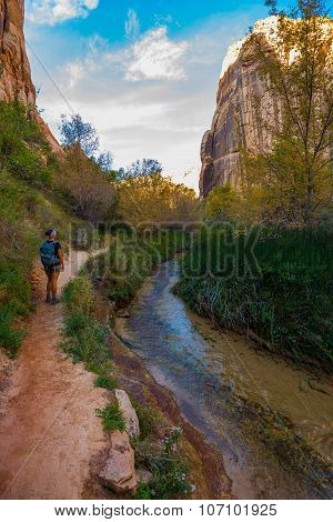 Hiker, Calf Creek Canyon Trail