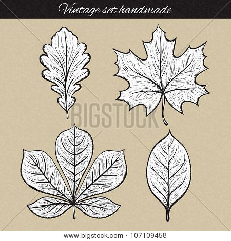 Retro set of 4 leaf sketch handmade. Vintage leaves