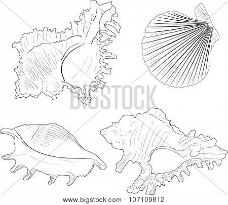 illustration with four light shellfishes sketches isolated on white background