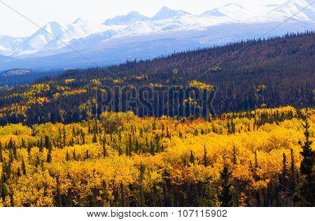 Yellow birch leaf on blue mountain background