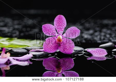 Pink orchid ,petals with green leaf with therapy stones