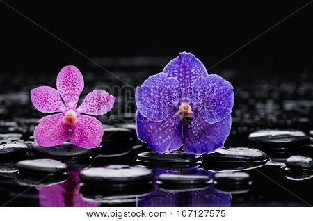 Beautiful pink and purple orchid and therapy stones