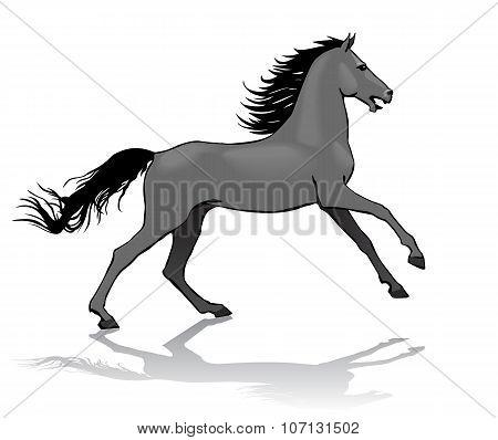 Horse,  Illustration, Isolated