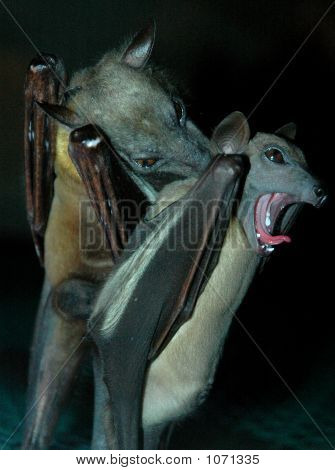 Couple Bats