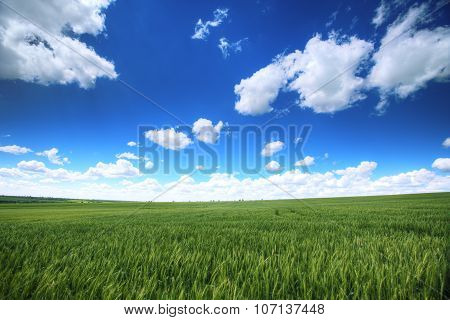 Sky With Fluufy Clouds Over The Fresh Green Fields