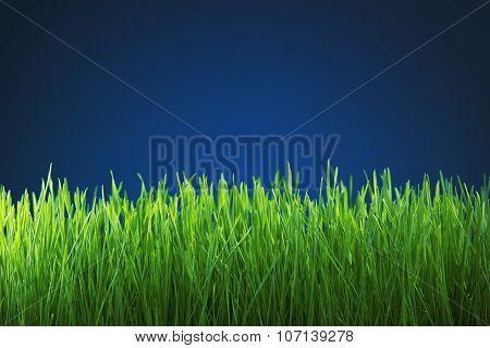 Fresh Green Grass On Blue Background