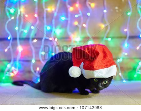 Black Cat In Santa Claus Red Hat