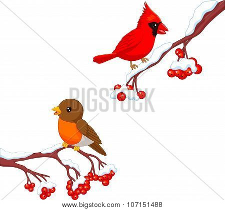 Cute cartoon robin bird and cardinal bird on the berry tree