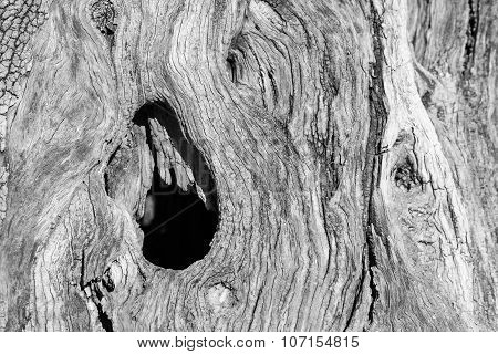 Abstract Texture Of A Trunk An Old Olive Tree