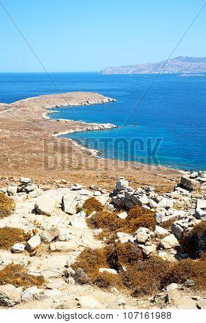 Bush   In Delos Greece  Historycal Acropolis And Old Ruin