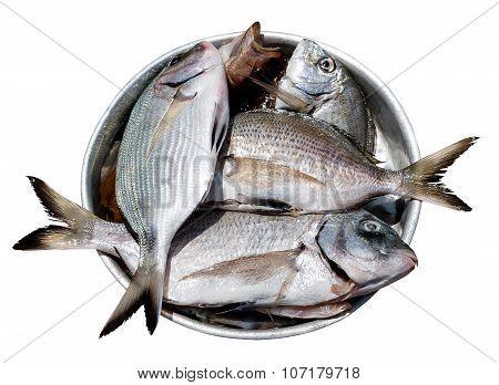 Fish In Metal Plate