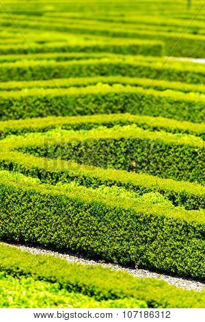 Green Hedge Labyrinth In French Garden.