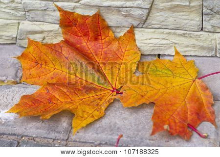 Maple Leaves On The Stone Pavement. Bright Yellow And Orange Leaves On A Gray Stone. Structures.