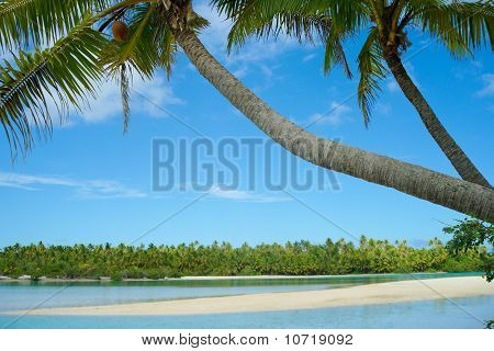 Palms Trees Leaning Over Waters Edge, Idyllic Tropical Scene.