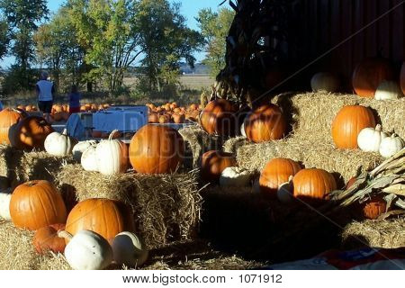 Pumpkins On Straw Bales