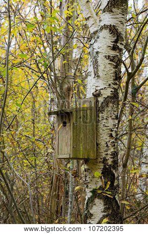 Birdhouse In The Tree