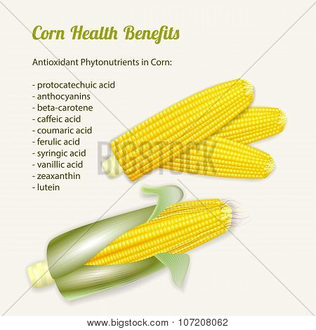 Vector Illustration Of Stylized Fresh Ripe Corn In The Cob.