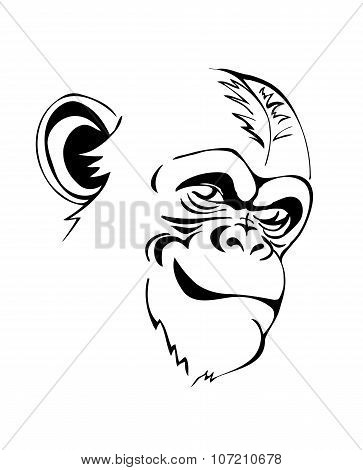 head angry chimp