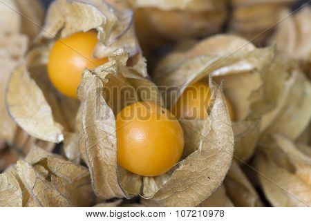 Raw Physalis Fruit