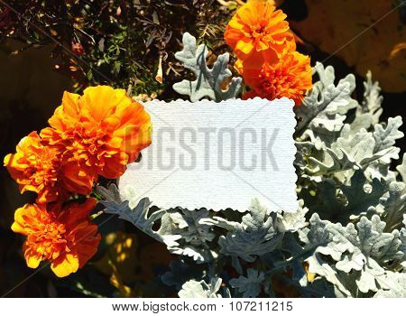 Sheet for your text among the orange flowers marigold and green plants