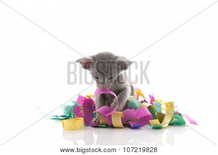 Birthday little cat playing with colorful confetti