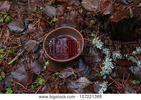 Bowl of tea on the grass in the autumn forest