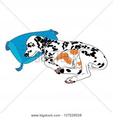 Dog And Cat Sleep