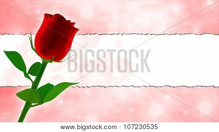 birthday card with red rose and pink frame