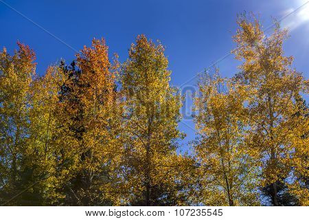 Backlit Trees In Autumn.