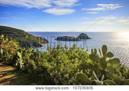 Elba Island, Cactus Indian Fig Opuntia, Innamorata Beach View Capoliveri Tuscany, Italy.