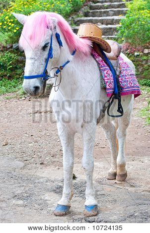 Pink haired white horse