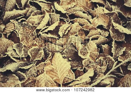 Iced Autumn leaf texture pattern background