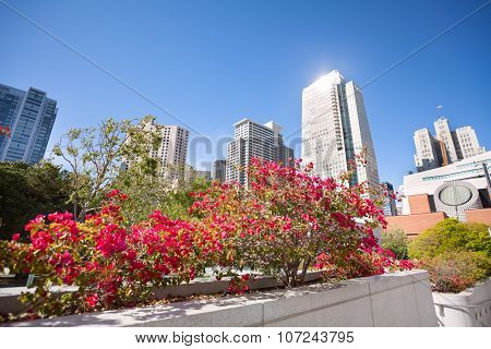 Pink blossoming flowers, Yerba Buena Gardens park